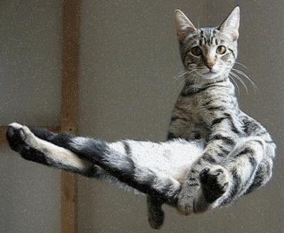 Samadhi-conectarea universala (inteligenta materiei) - Pagina 2 Cat-in-the-air