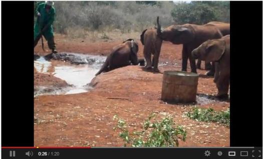 I know, baby elephant.  I feel your struggle.