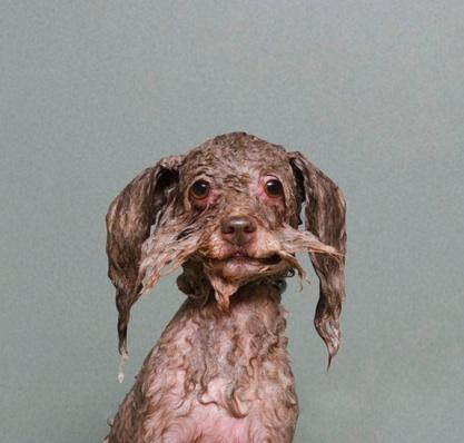 http://sophiegamand.com/wet-dog/